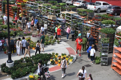 Thousands attended SundayÕs 49th Annual Flower Day at Eastern Market in Detroit May 17, 2015. Growers sell 15 acres worth of colorful annuals and perennials, herbs, vegetable and fruit plants, shrubs and trees in one afternoon. Eastern MarketÕs Flower Day is the largest open-air flowerbed market in the country. (Tanya Moutzalias   MLive Detroit)